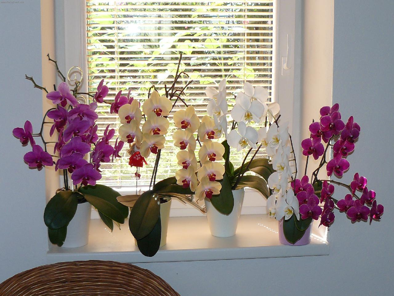 Как разводить орхидеи в домашних условиях