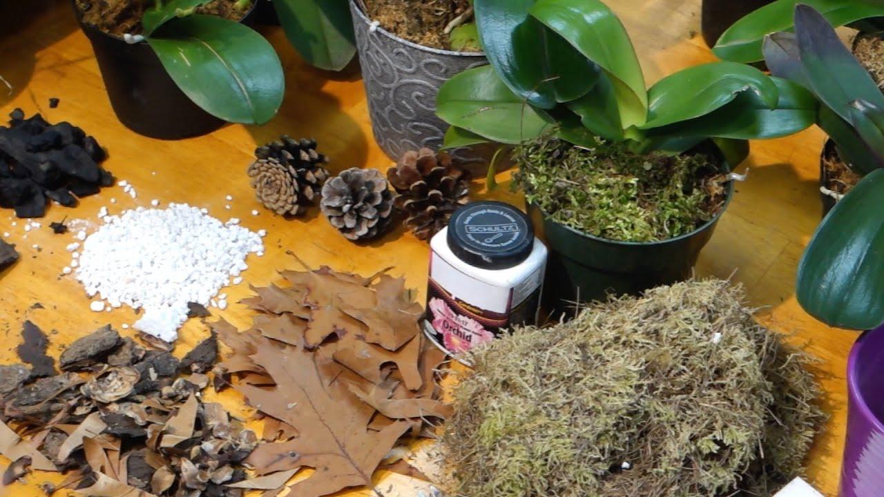 Как развести орхидею в домашних условиях